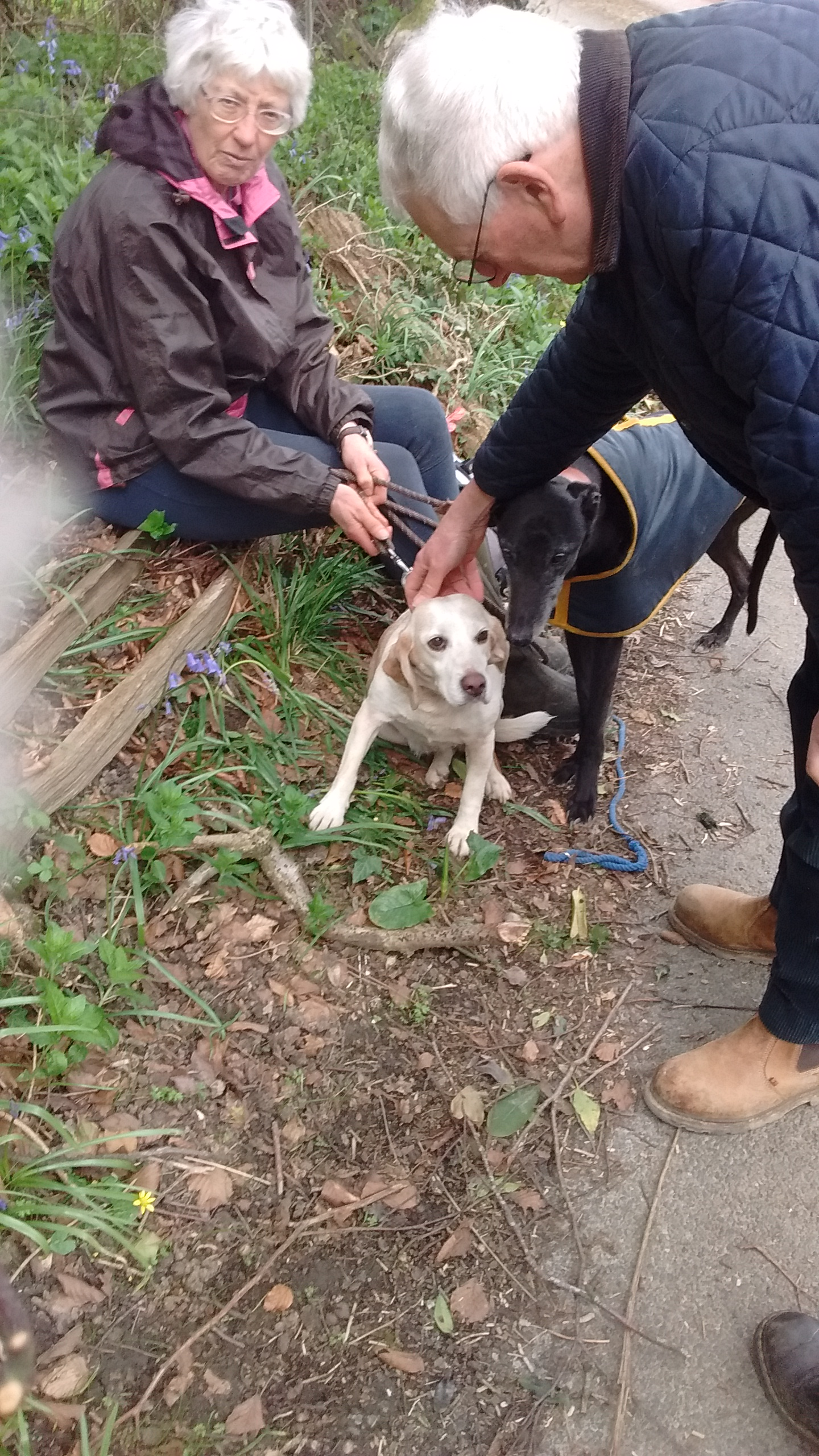 bella-beagle-reunited