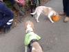 bella-beagle-1-reunited