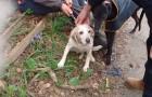 bella beagle reunited