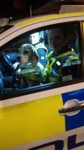 Tiga in police car